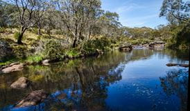 Aeroplane Hill trail, Barrington Tops National Park. Photo: John Spencer/NSW Government