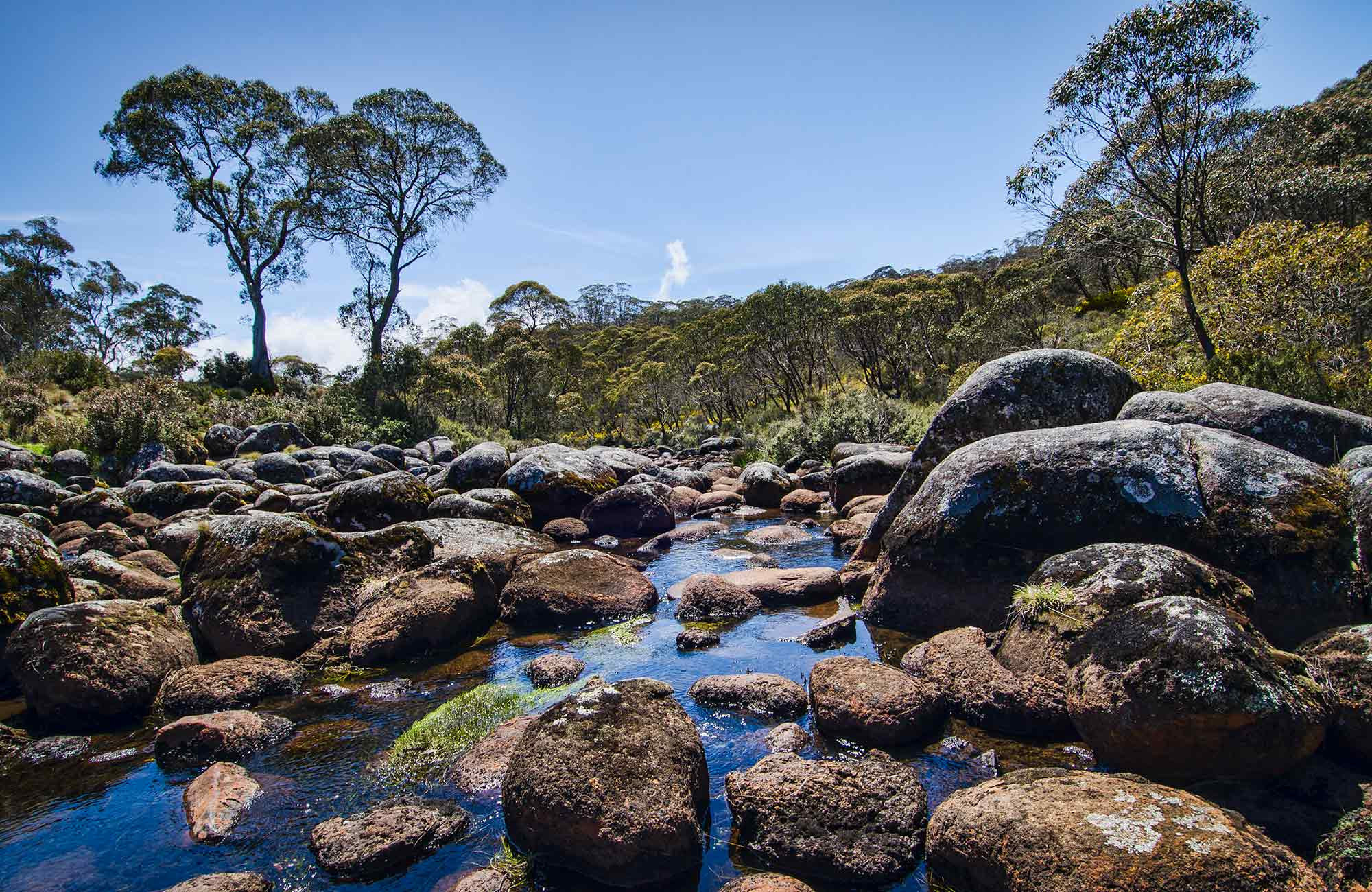 Junction Pools campground, Barrington Tops National Park. Photo: John Spencer/NSW Government