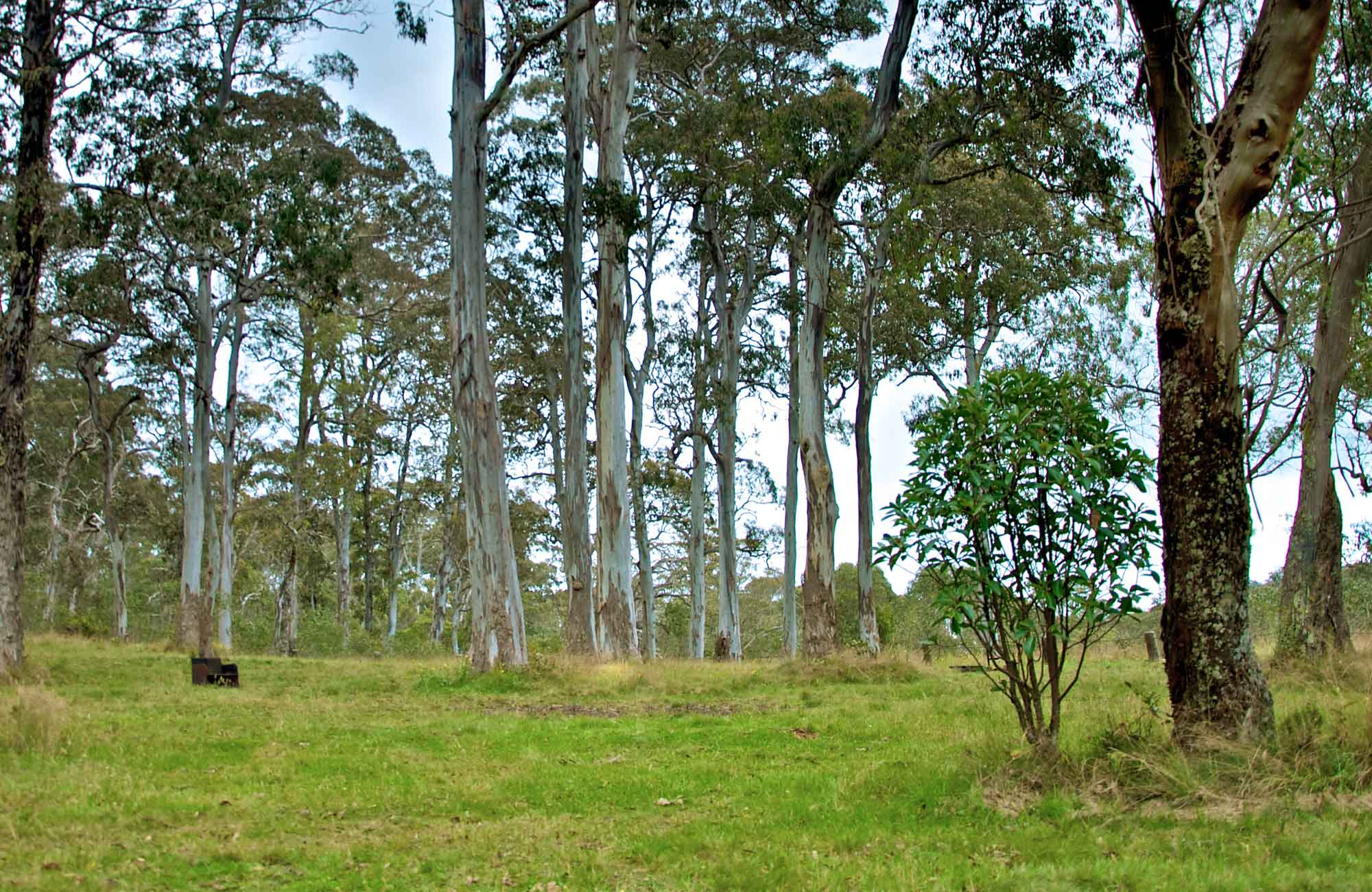 Campground nestled amoung the gum trees. Photo: John Spencer