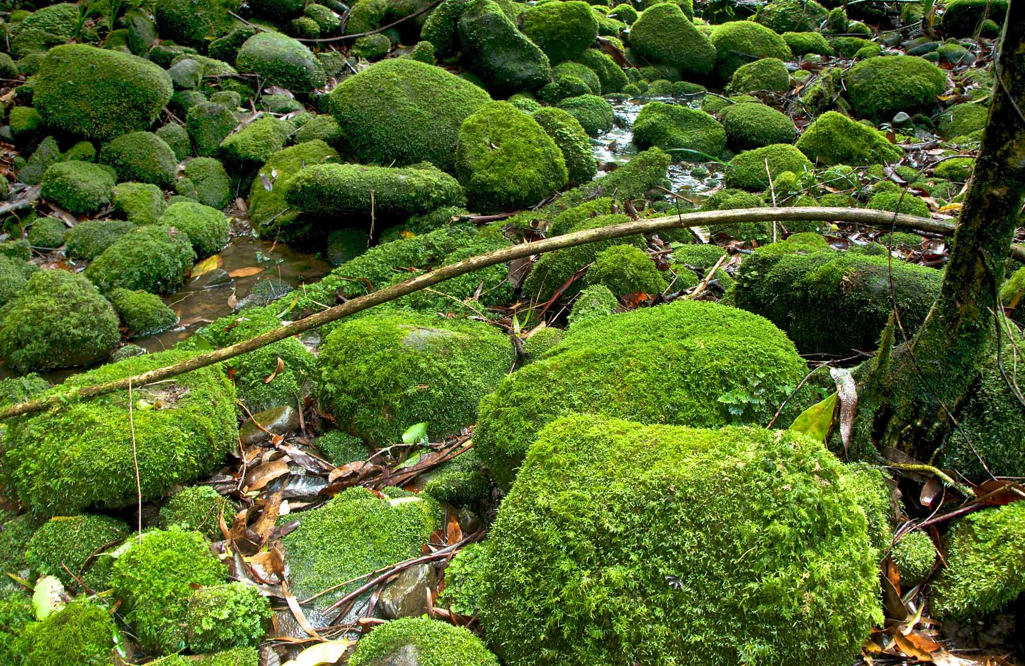 Moss covered rocks. Photo: John Spencer