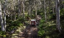 A 4WD vehicle on Barrington trail, Barrington National Park. Photo: Robert Mulally/OEH.