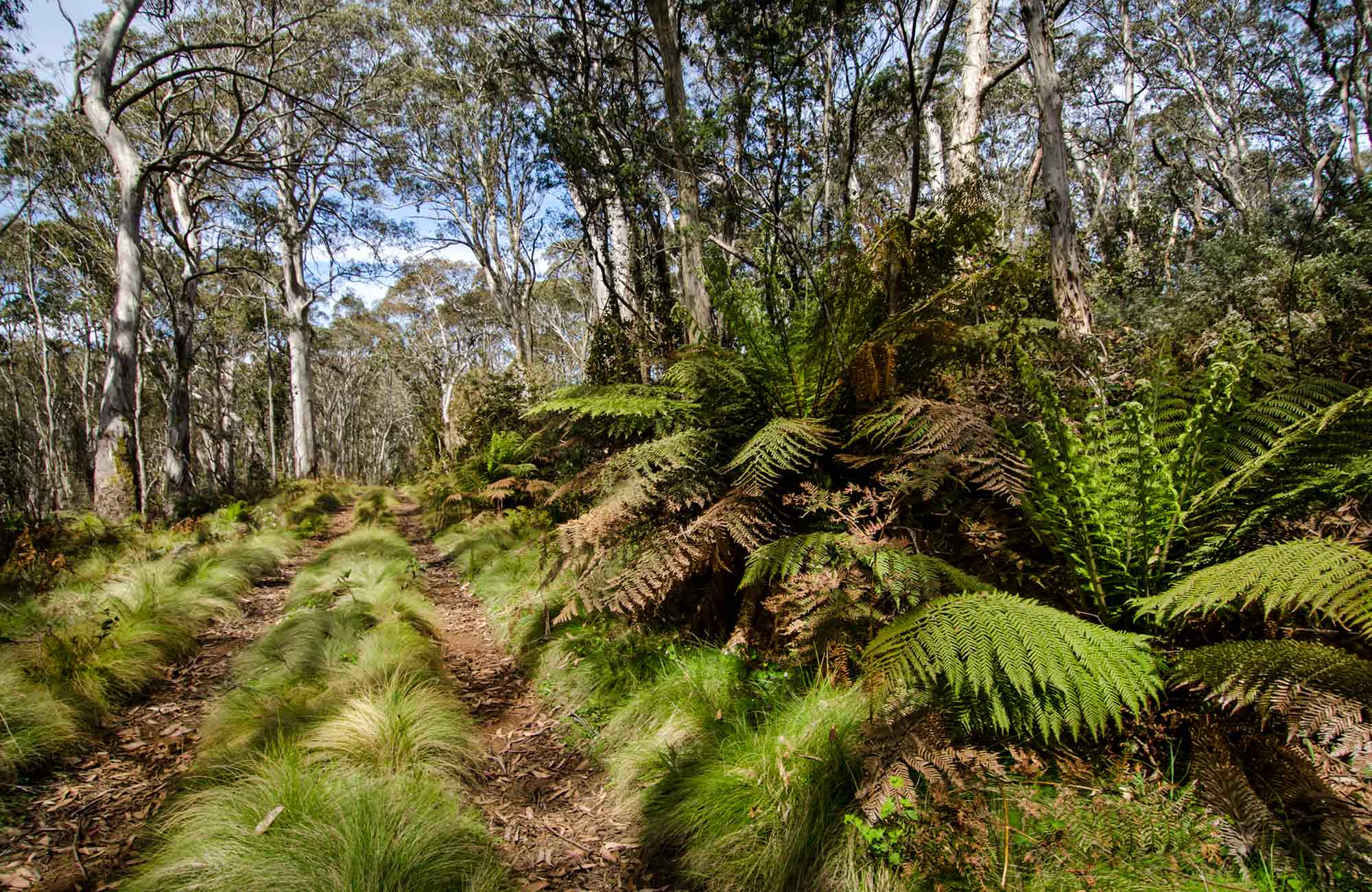 Looking along the Barrington Trail. Photo:John Spencer Copyright:NSW Government.