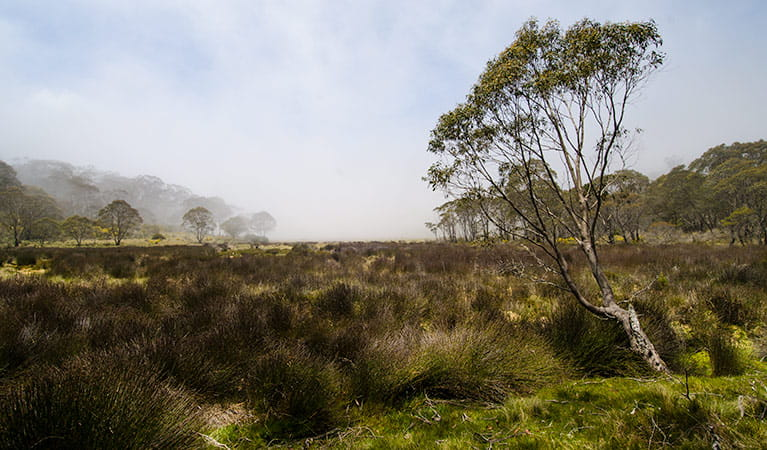 Black Swamp campground, Barrington Tops National Park. Photo: John Spencer/NSW Government