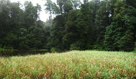 Burraga Swamp track, Barrington Tops National Park. Photo: Sean Thompson Copyright:NSW Government