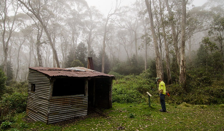 Careys Peak trail, Barrington Tops National Park. Photo: John Spencer/NSW Government
