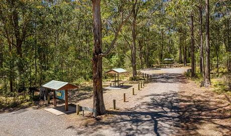 The road to Cobark Park picnic area with signage and a covered picnic table on the left in Barrington Tops National Park. Photo: John Spencer/DPIE