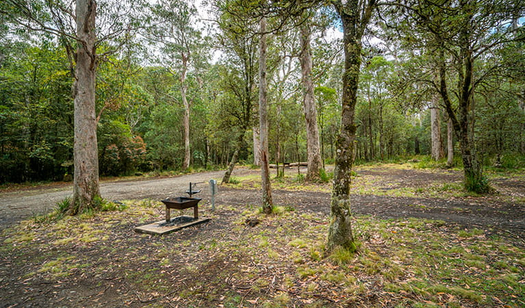 A fire pit at Devils Hole campground in Barrington Tops National Park. Photo: John Spencer/DPIE