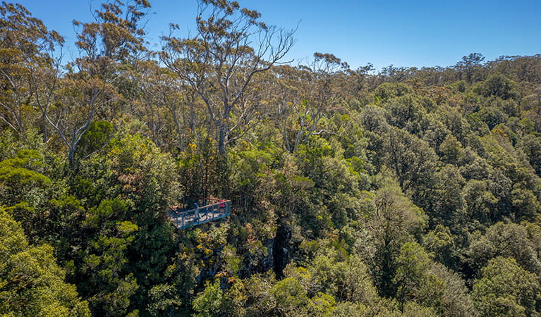 Devils Hole lookout platform, surrounded by woodland in Barrington Tops National Park. Photo: John Spencer/DPIE