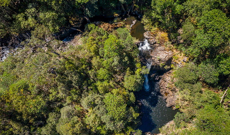 Aerial view of Gloucester Falls walking track in Barrington Tops National Park. Photo: John Spencer/DPIE