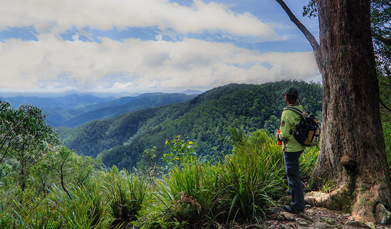 A man looking out at the view from Gloucester Falls walking track in Barrington Tops National Park. Photo: John Spencer/NSW Government