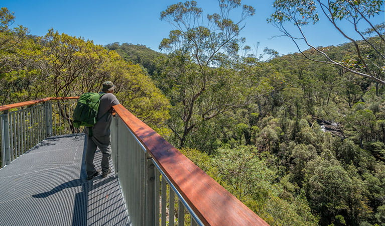 A man at a lookout taking in the view of Barrington Tops National Park from Gloucester Falls walking track. Photo: John Spencer/DPIE