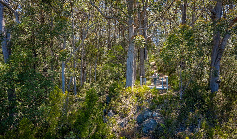 A lookout platform surrounded by woodland along Gloucester Falls walking track in Barrington Tops National Park. Photo: John Spencer/DPIE