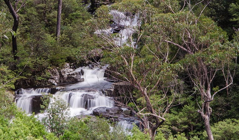 The view of Gloucester Falls from Gloucester Falls walking track in Barrington Tops National Park. Photo: John Spencer/NSW Government