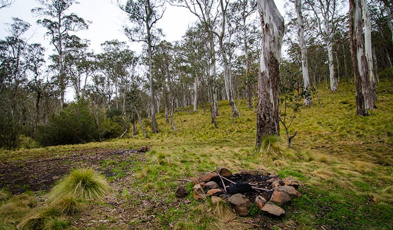 Gummi Falls campground, Barrington Tops National Park. Photo: John Spencer/NSW Government