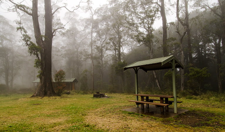 Picnic tables surrounded by trees under the cover of mist in Honeysuckle picnic area, Barrington Tops National Park. Photo: John Spencer/NSW Government