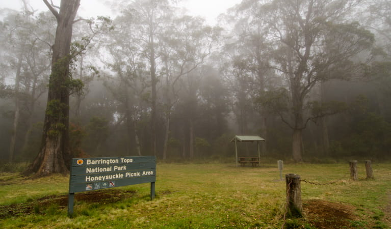 Signage and picnic tables surrounded by mist in Honeysuckle picnic area, Barrington Tops National Park. Photo: John Spencer/NSW Government