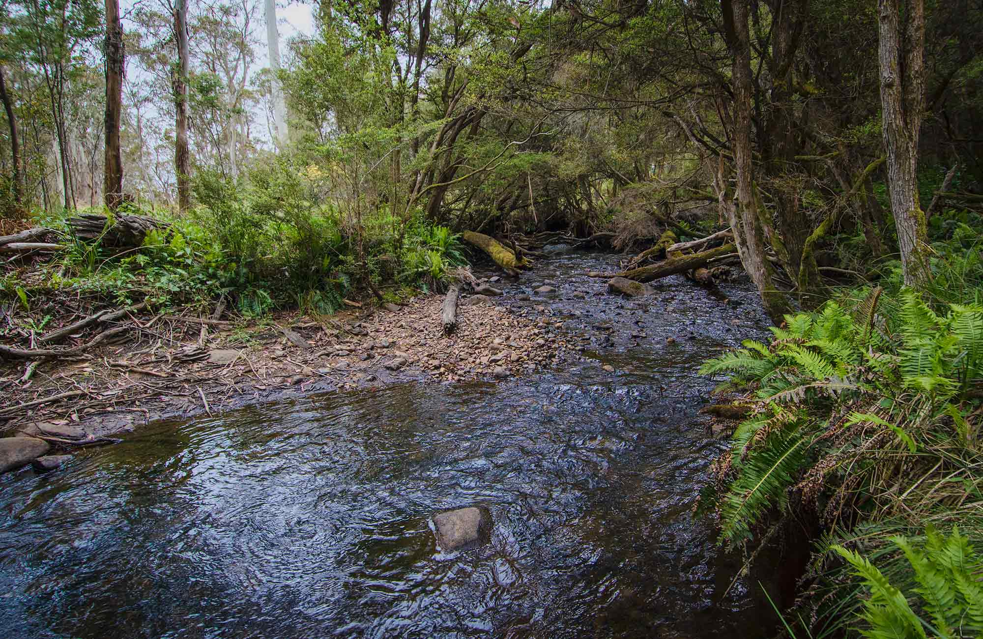 Horse Swamp campground, Barrington Tops National Park. Photo: John Spencer/NSW Government