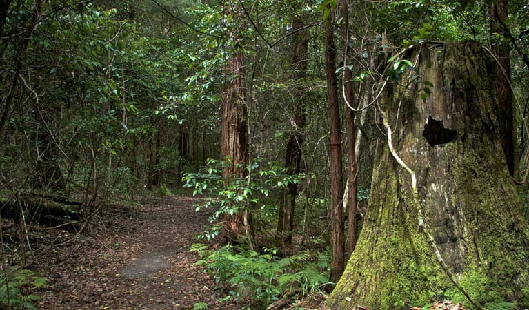 Jerusalem Creek trail, Barrington Tops National Park. Photo: John Spencer