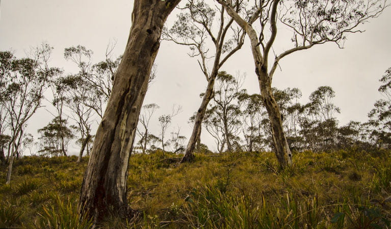 Mountaineer trail, Barrington Tops National Park. Photo: John Spencer/NSW Government