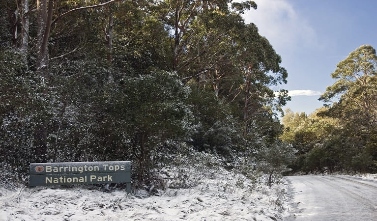 Barrington Tops Forest Road. Photo: Shane Ruming/OEH