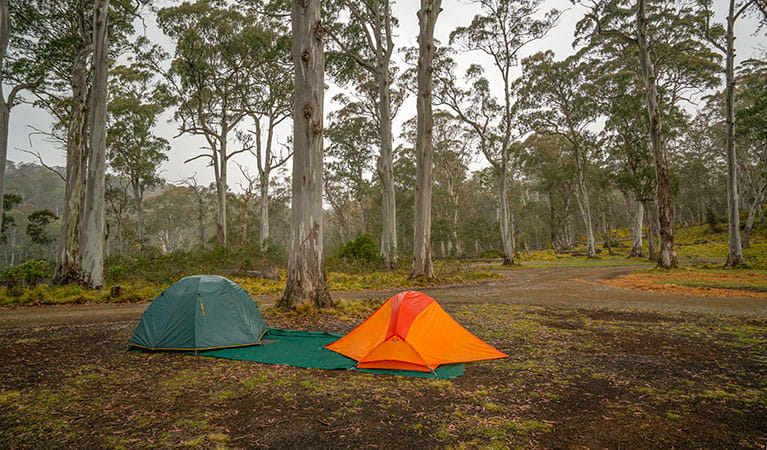 Two tents pitched under trees in Polblue campground and picnic area, Barrington Tops National Park. Photo: John Spencer/DPIE
