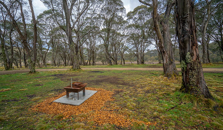 A wood barbecue in Polblue campground and picnic area, Barrington Tops National Park. Photo: John Spencer/DPIE