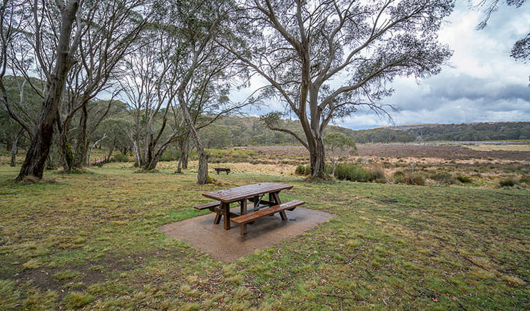 A picnic table in Polblue campground and picnic area, Barrington Tops National Park. Photo: John Spencer/DPIE