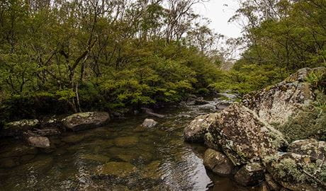 River walking track, Barrington Tops National Park. Photo: John Spencer/NSW Government