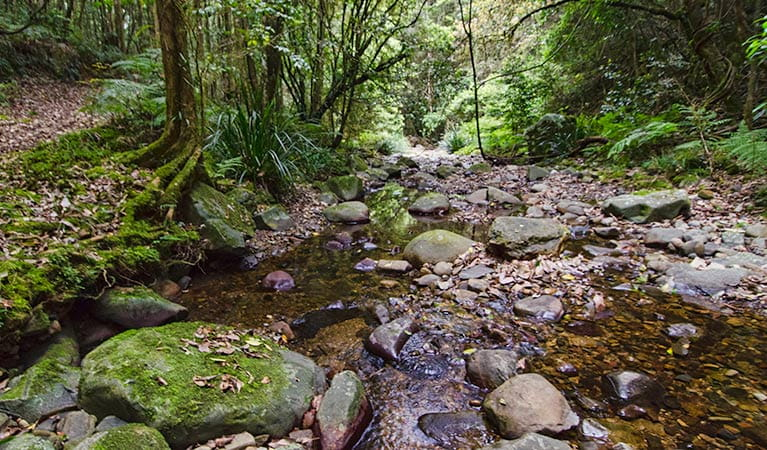 Sharpes Creek track, Barrington Tops National Park. Photo: John Spencer/NSW Government