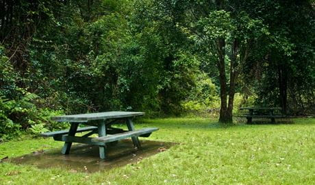 Williams River picnic area. Photo: John Spencer