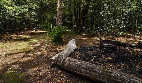 Wombat Creek campground, Barrington Tops National Park. Photo: John Spencer/NSW Government