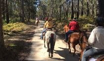 Group riding event Basket Swamp National Park. Photo:V Sherry Athra