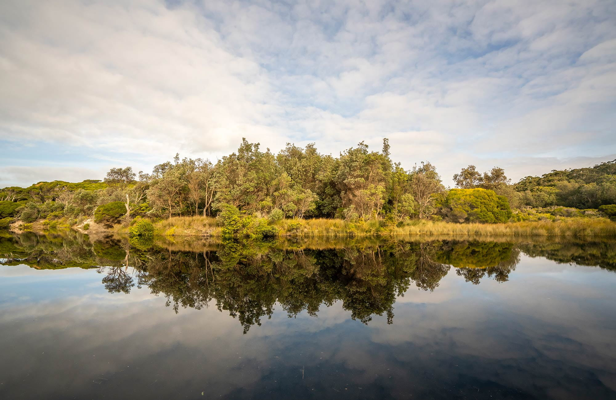 Trees reflecting in water at Saltwater Creek. Photo: John Spencer/OEH