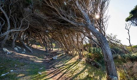 Boyds Tower to Saltwater Creek walking track, Ben Boyd National Park. Photo: John Spencer