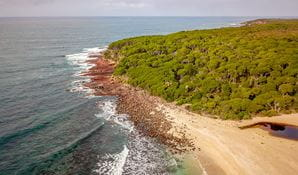 Aerial view of headland, ocean and eucalypt trees near Saltwater campground. Photo: John Spencer/DPIE