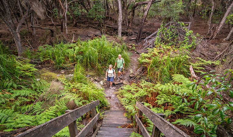 Bushwalkers on Light to Light trail, near Bittangabee campground, Ben Boyd National Park. Photo: J Spencer/OEH