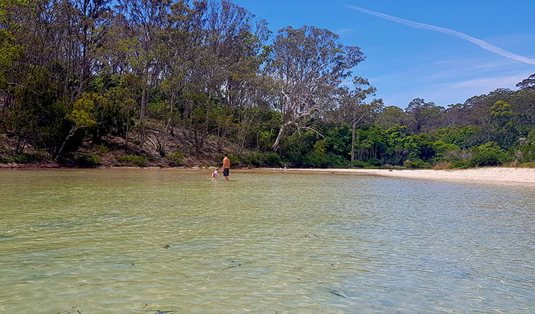 Father and child wading in the  shallow water at Severs Beach. Photo: Amanda Cutlack/DPIE
