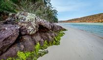 Pambula River walking track, Ben Boyd National Park. Photo: John Spencer
