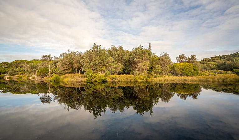 Trees reflecting in the still water of Saltwater Creek. Photo: John Spencer/OEH