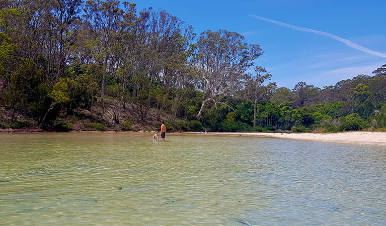Father and toddler wading in the shallow water of Severs Beach in Ben Boyd National Park. Photo: Amanda Cutlack/OEH