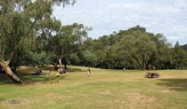 Green grass and trees in Bents Basin Road picnic area. Photo: John Yurasek