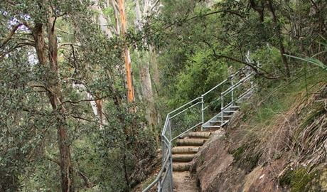 Staircase on Caleys lookout track. Photo: John Yurasek