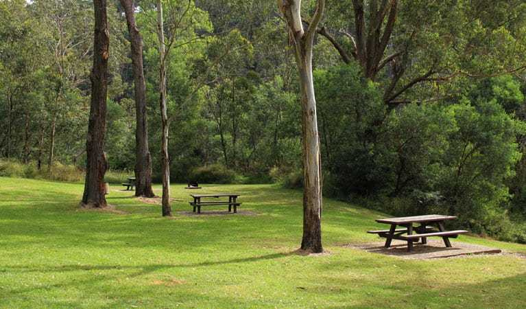 Grass, trees and picnic tables in Durawi picnic area, Bents Basin State Conservation Area. Photo: John Yurasek © DPIE
