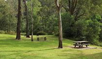 Grass, trees and picnic tables in Durawi picnic area, Bents Basin State Conservation Area. Photo: John Yurasek