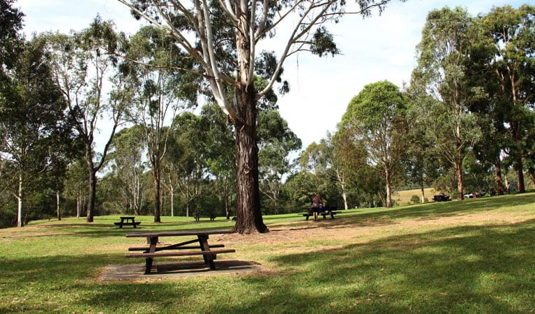 Trees, grass and tables in Durawi picnic area. Photo: John Yurasek