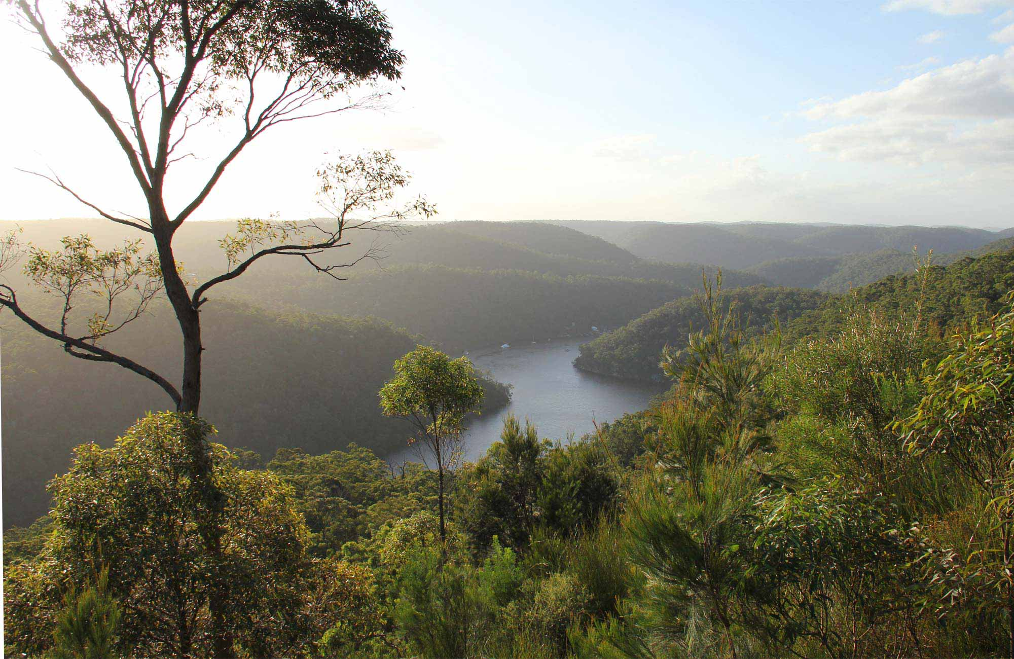 View of Berowra Valley creek. Photo: John Yurasek