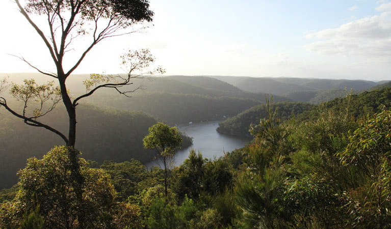 View over Berowra Valley from Barnetts lookout. Photo: John Yurasek