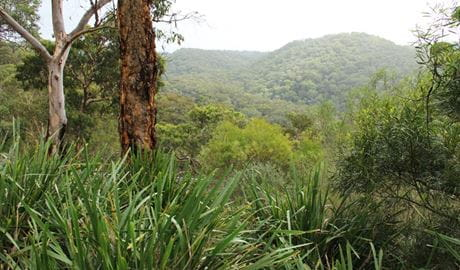 View over the landscape from Galston Gorge lookout, Berowra Valley Regional Park. Photo: John Yurasek