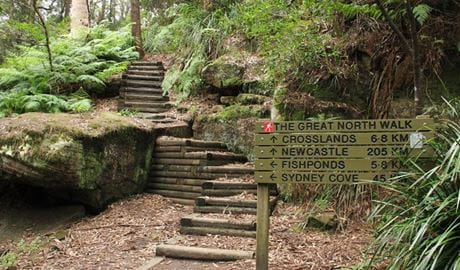Stairs on the Great North walk. Photo: John Yurasek
