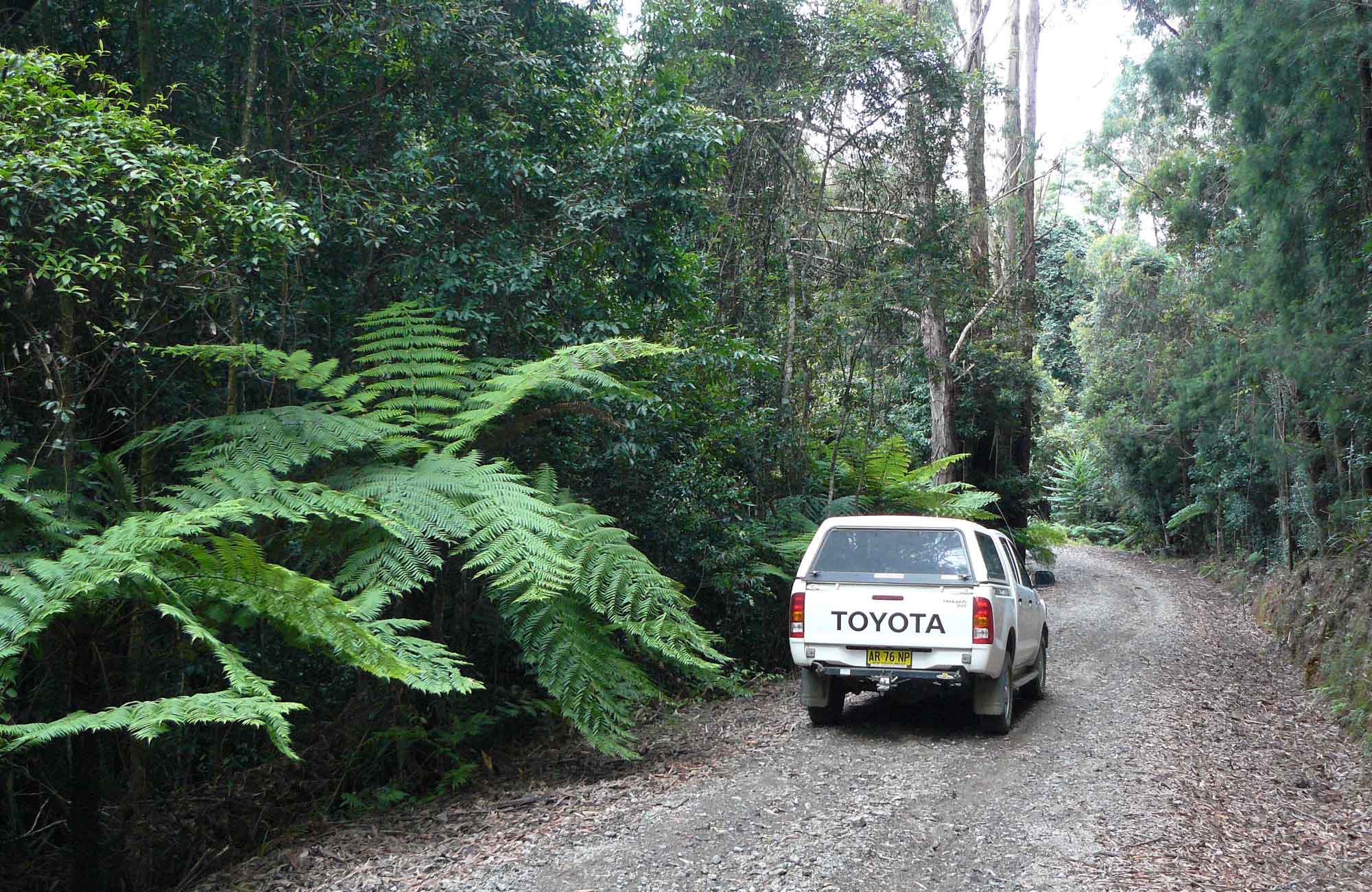 Range Road, Bindarri National Park. Photo: Barbara Webster/NSW Government